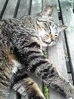 090422_cat.jpg